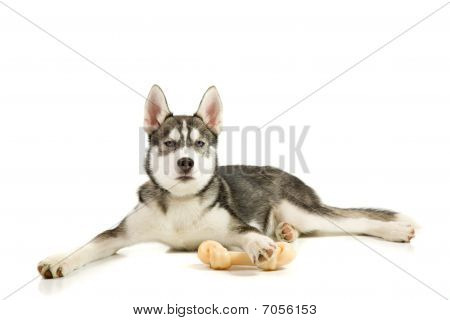 Puppy With The Bone