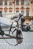 Horse Carriage waiting for tourists at the Old Square in Prague. poster