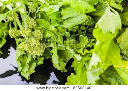 Fresh Turnip Greens
