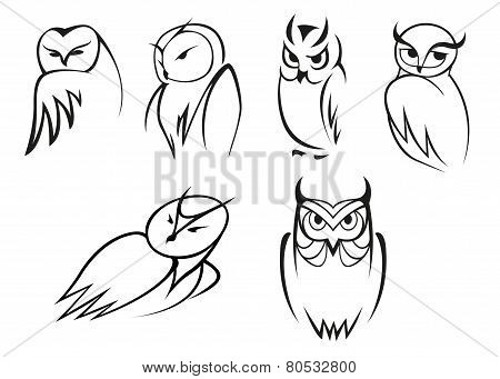 Owl bird icons in doodle outline style