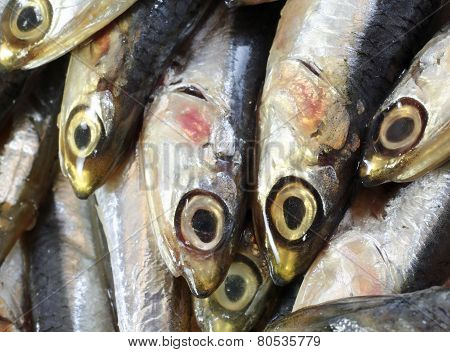 Raw Anchovies Just Fish For Sale In Fish Market