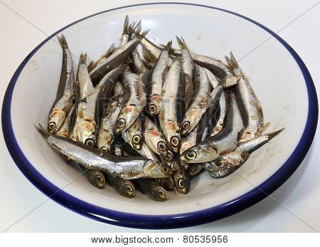 Dish With Freshly Caught Anchovies Ready To Be Fried