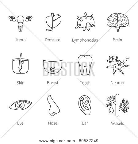 Vector Icon Set Of Human Internal And External Organs In Flat Style