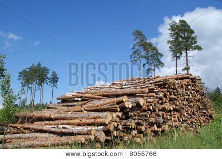 Pile Of Timber Logs Summer Landscape