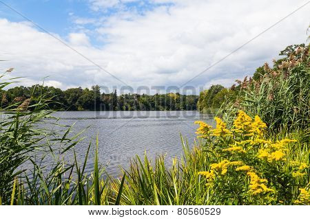Peaceful Lake With Copyspace And Foilage