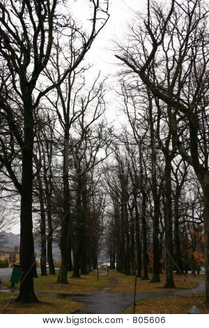 Dark Tree-Gasse