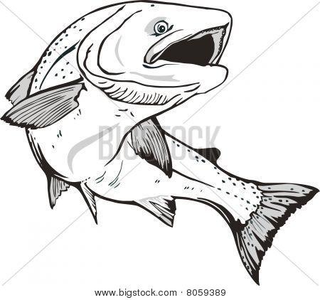 king salmon fish
