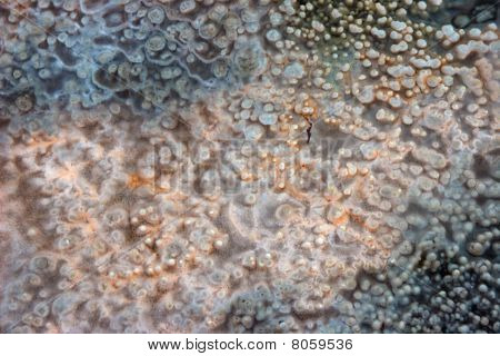 Macro Photo Of Hot Spring Mineral