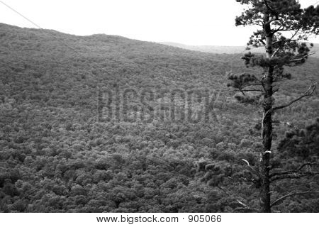 view of the forest in the porcupine mountains of michigan's upper peninsula