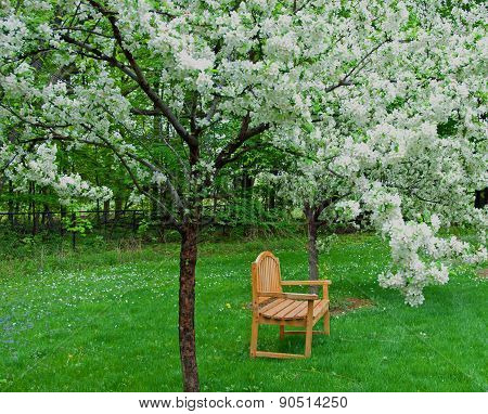 A Seat Among the Blossoms