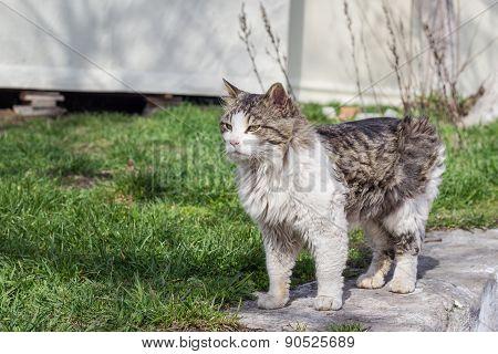 Grey Cat Sitting On The Street
