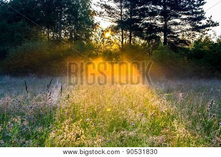 Rural Landscape With The Sun Beams  On A Meadow