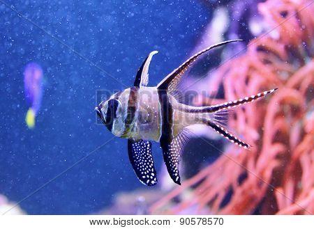 Fish In Aquarium