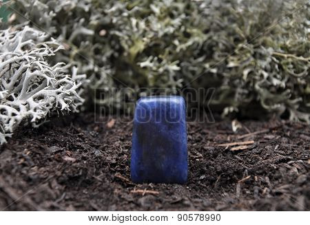 Sodalite On Forest Floor