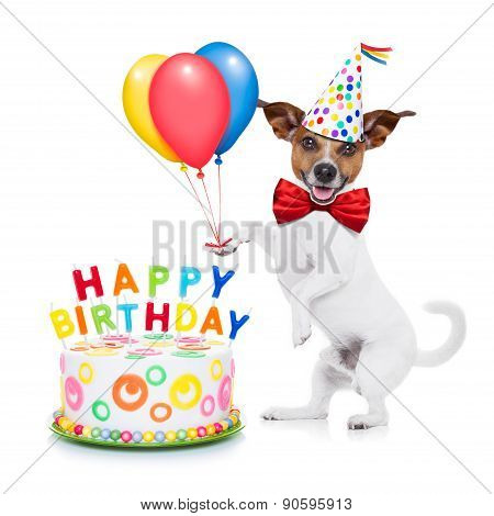 jack russell dog as a surprise with happy birthday cake wearing red tie and party hat holding balloons isolated on white background poster