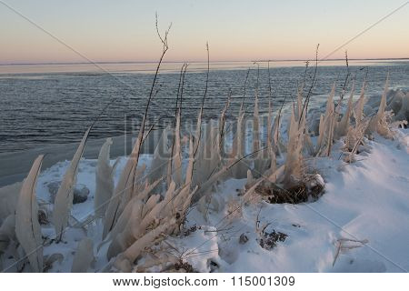 Rows Of Ice Covered Plants