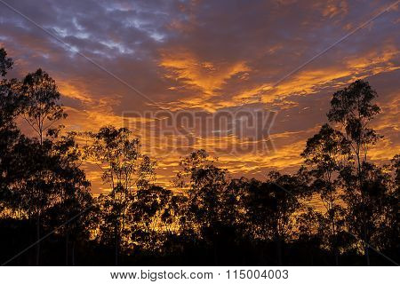 Dramatic Australian Sunrise With Gum Tree Silhouette