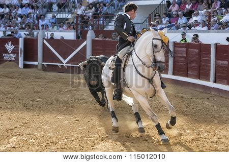 Spanish bullfighter on horseback Leonardo Hernandez chased by the bull in a very complicated positio