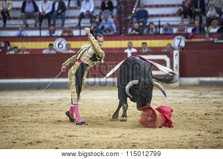 Spanish Bullfighter Cesar Jimenez, The Bull Takes The Crutch From Him To The Soil And The Toreador S