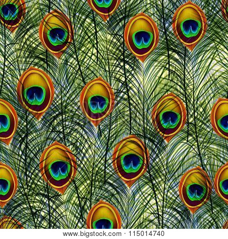 Seamless texture pattern with peacock feathers. Vector, EPS10