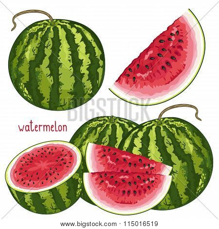 Watermelon Isolated, Vector.