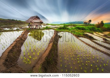 Terraced rice rield