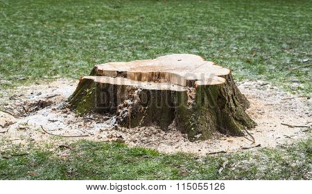 Stump Of A Felled Tree In A Grass Field