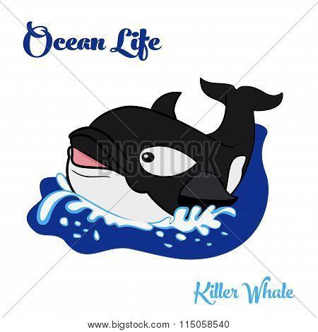 Killer whale in the ocean