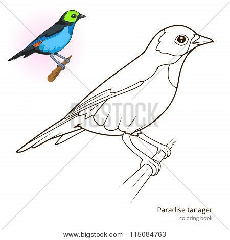 Paradise tanager color book vector
