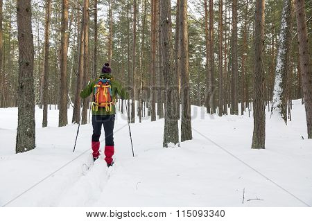 Backcountry Skier In Snowy Forest