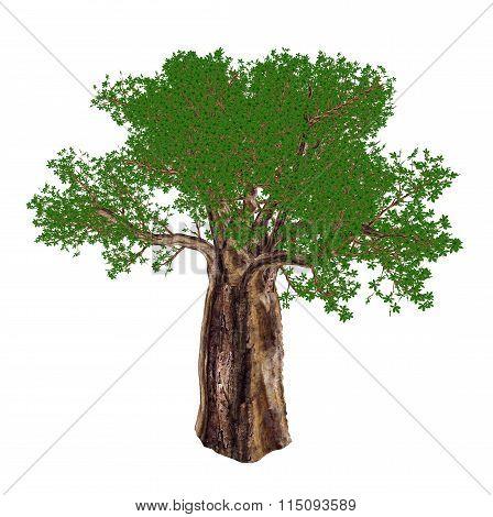 Baobab tree, adansonia digitata - 3D render
