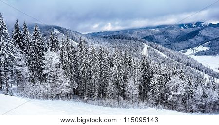 Ski slope with snow-covered trees