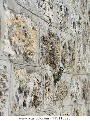 Old Stone Brick Wall Textured Background With A Bird