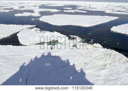 Shadow of ship in ice