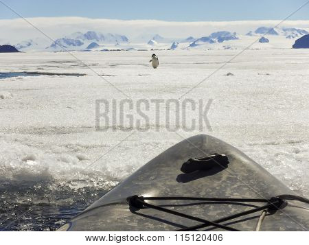 Wildlife Encounter In Kayak, Gustaf Sound, Antarctica