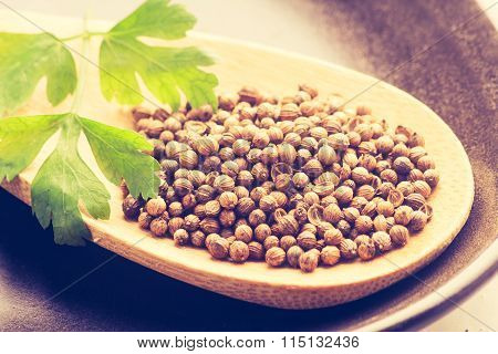 Vintage Photo Of Coriander Seeds On Wooden Spoon