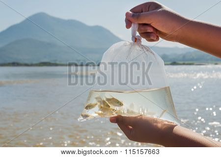 Fish in side the plastic bag before release in the river