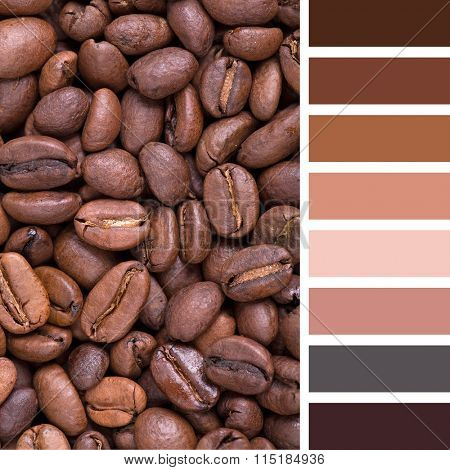 A background of City roast coffee beans. In a colour palette with complimentary colour swatches.