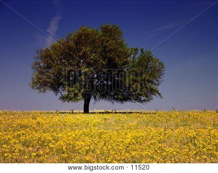 Yellow-Draped Field