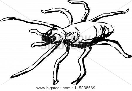 Yellow Sac Spider Outline