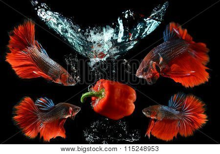 Droping Fruit And Saimese Fighting Fish