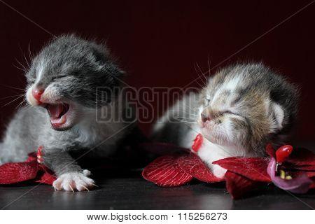 Katzen Neugeborenes Kitten