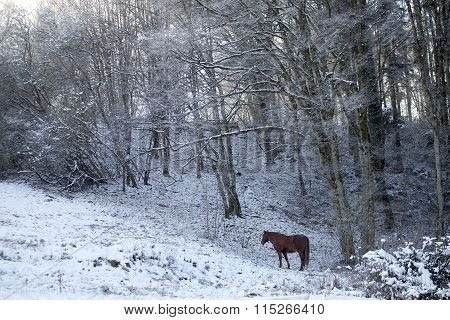 Horse in winter scene outside
