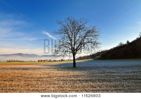 Lone tree in country field