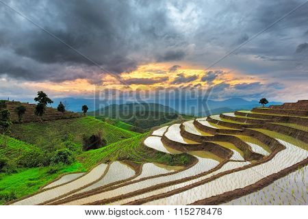 Beautiful terraced rice paddy field in Thailand