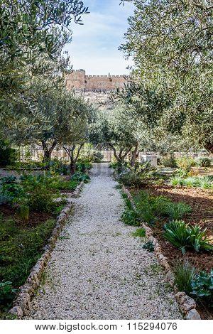 Garden of Gethsemane in Jerusalem