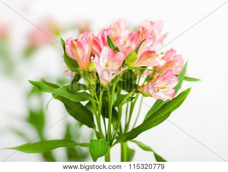 Bouquet Of Pink Alstroemeria
