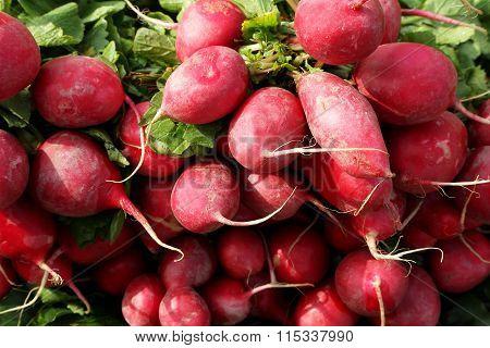 Cherry Belle Radish Or Muli