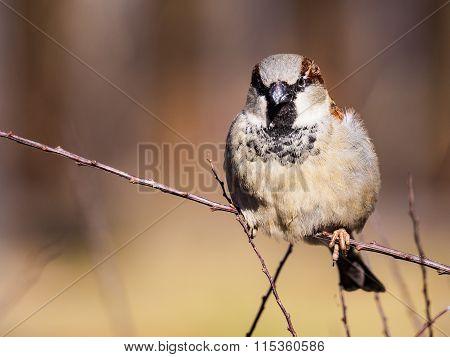 A Sparrow On A Branch