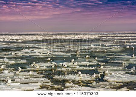 Seagulls On Icy Sea